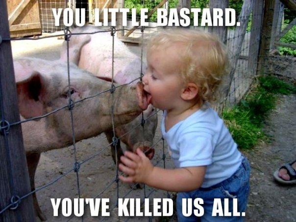 Pigplague